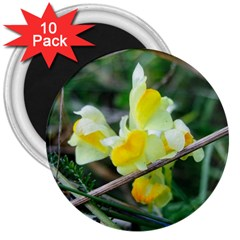 Linaria 3  Button Magnet (10 Pack) by ansteybeta