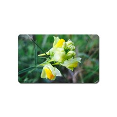 Linaria Flower Magnet (name Card) by ansteybeta