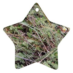 Linaria Grass Pattern Star Ornament by ansteybeta