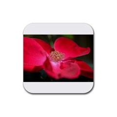 Bright Red Rose Rubber Square Coaster (4 Pack)  by timelessartoncanvas