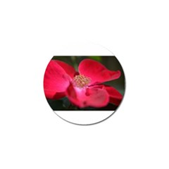 Bright Red Rose Golf Ball Marker (10 Pack) by timelessartoncanvas
