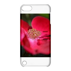Bright Red Rose Apple Ipod Touch 5 Hardshell Case With Stand by timelessartoncanvas