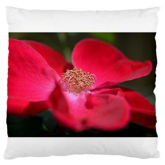 Bright Red Rose Large Flano Cushion Cases (two Sides)  by timelessartoncanvas
