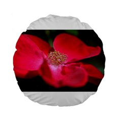 Bright Red Rose Standard 15  Premium Flano Round Cushions by timelessartoncanvas