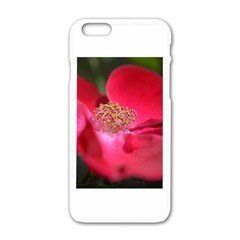 Bright Red Rose Apple Iphone 6 White Enamel Case by timelessartoncanvas