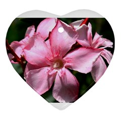 Pink Oleander Ornament (heart)  by timelessartoncanvas