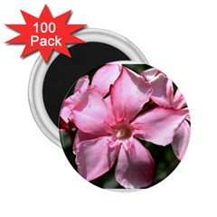Pink Oleander 2 25  Magnets (100 Pack)  by timelessartoncanvas