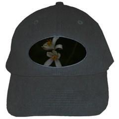 Lemon Blossom Black Cap by timelessartoncanvas