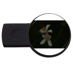 Lemon Blossom Usb Flash Drive Round (4 Gb)