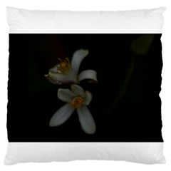 Lemon Blossom Large Flano Cushion Cases (one Side)  by timelessartoncanvas