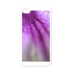 Purple Flower Pedal Apple Iphone 4 Case (white) by timelessartoncanvas