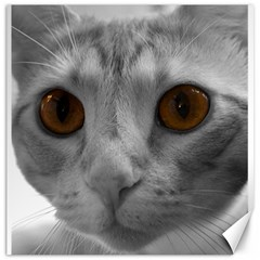 Funny Cat Canvas 12  X 12   by timelessartoncanvas
