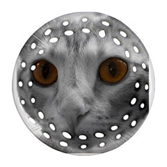Funny Cat Ornament (round Filigree)  by timelessartoncanvas