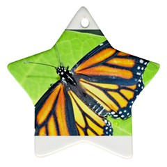 Butterfly 2 Ornament (star)  by timelessartoncanvas