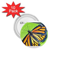 Butterfly 2 1 75  Buttons (10 Pack) by timelessartoncanvas