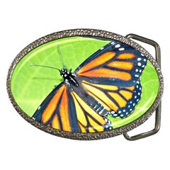 Butterfly 2 Belt Buckles by timelessartoncanvas