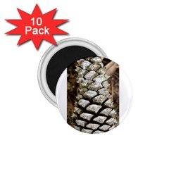 Pincone Spiral #2 1 75  Magnets (10 Pack)  by timelessartoncanvas