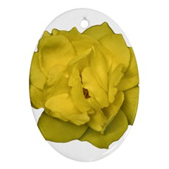 Isolated Yellow Rose Photo Ornament (oval)  by dflcprints
