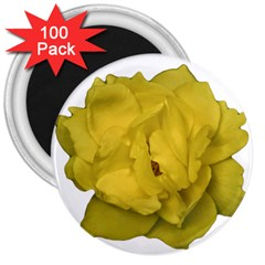 Isolated Yellow Rose Photo 3  Magnets (100 Pack) by dflcprints