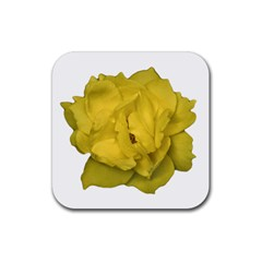 Isolated Yellow Rose Photo Rubber Coaster (square)  by dflcprints