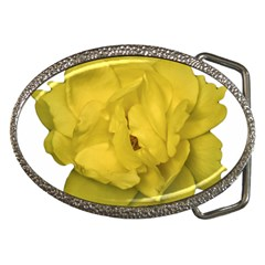 Isolated Yellow Rose Photo Belt Buckles