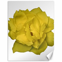 Isolated Yellow Rose Photo Canvas 12  X 16