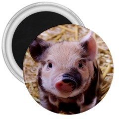 Sweet Piglet 3  Magnets