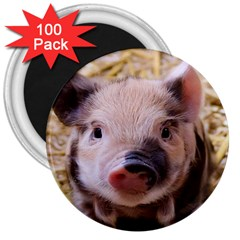 Sweet Piglet 3  Magnets (100 Pack)