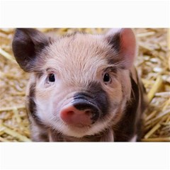 Sweet Piglet Collage 12  X 18  by ImpressiveMoments