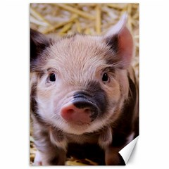 Sweet Piglet Canvas 24  X 36  by ImpressiveMoments
