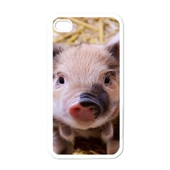 Sweet Piglet Apple Iphone 4 Case (white)