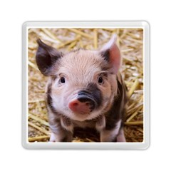 Sweet Piglet Memory Card Reader (square)