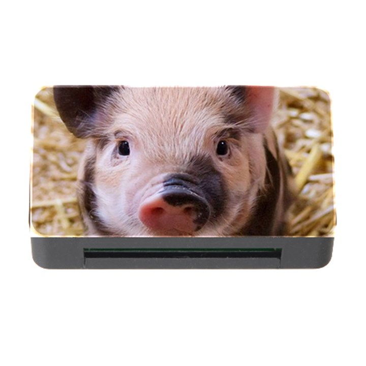 Sweet Piglet Memory Card Reader with CF