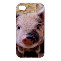 Sweet Piglet Apple Iphone 4/4s Hardshell Case