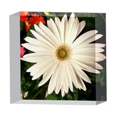 Daisyc 5  x 5  Acrylic Photo Blocks