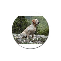 Yellow Lab Sitting Magnet 3  (Round) by TailWags