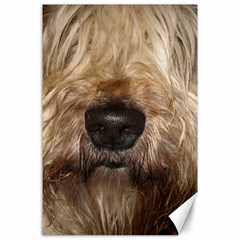 Wheaten Canvas 24  X 36  by TailWags