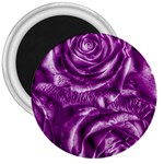 Gorgeous Roses,purple  3  Magnets