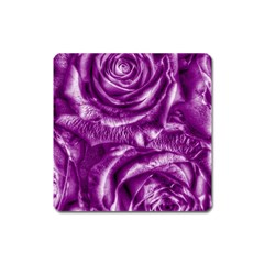 Gorgeous Roses,purple  Square Magnet
