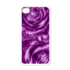 Gorgeous Roses,purple  Apple Iphone 4 Case (white)