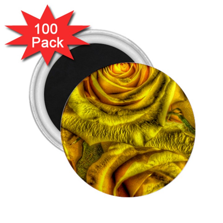 Gorgeous Roses, Yellow  2.25  Magnets (100 pack)
