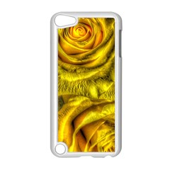 Gorgeous Roses, Yellow  Apple Ipod Touch 5 Case (white)