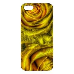 Gorgeous Roses, Yellow  Apple Iphone 5 Premium Hardshell Case