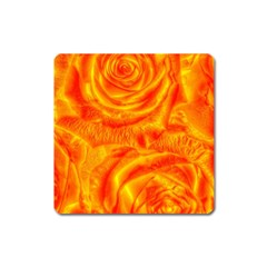Gorgeous Roses, Orange Square Magnet