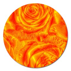 Gorgeous Roses, Orange Magnet 5  (round)