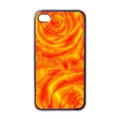 Gorgeous Roses, Orange Apple Iphone 4 Case (black) by MoreColorsinLife