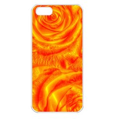 Gorgeous Roses, Orange Apple Iphone 5 Seamless Case (white)