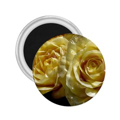 Yellow Roses 2 25  Magnets