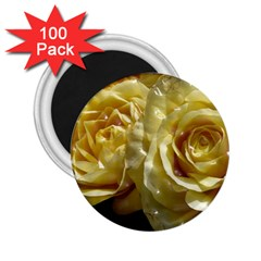 Yellow Roses 2 25  Magnets (100 Pack)