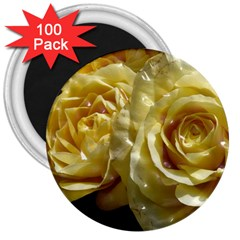 Yellow Roses 3  Magnets (100 Pack)